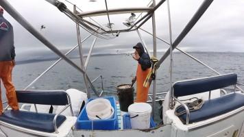 O carinha jogando o líquido de peixe na água pra atrair os tubarões